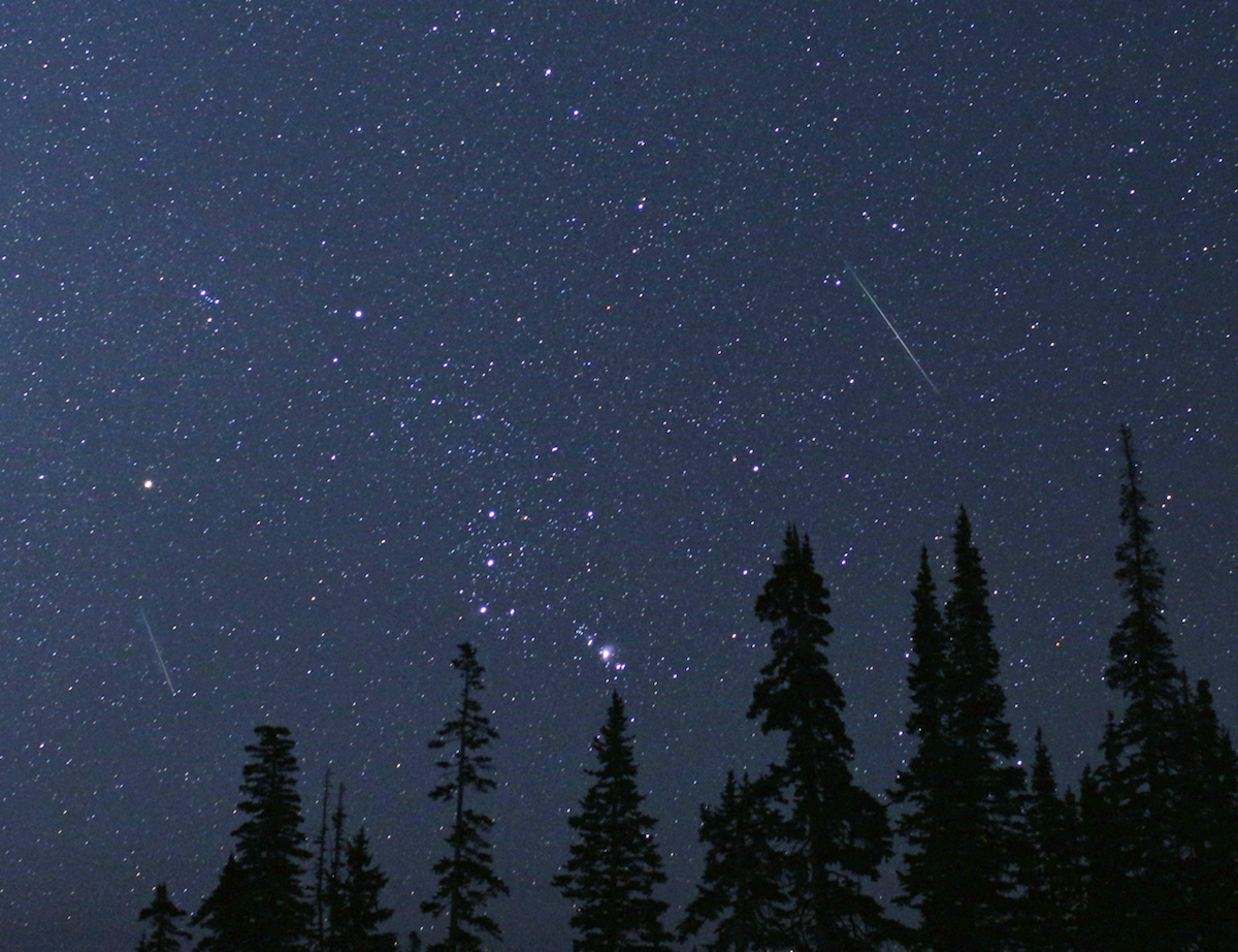 shooting stars in starry sky with shiloutted pine trees