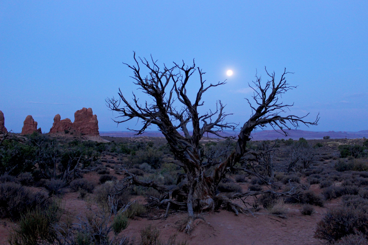 full moon over desert with dead tree