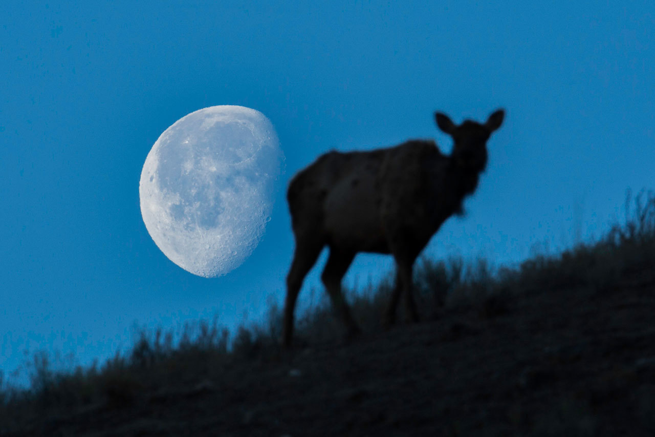 July 2019: The Next Full Moon is the Buck Moon – NASA Solar System