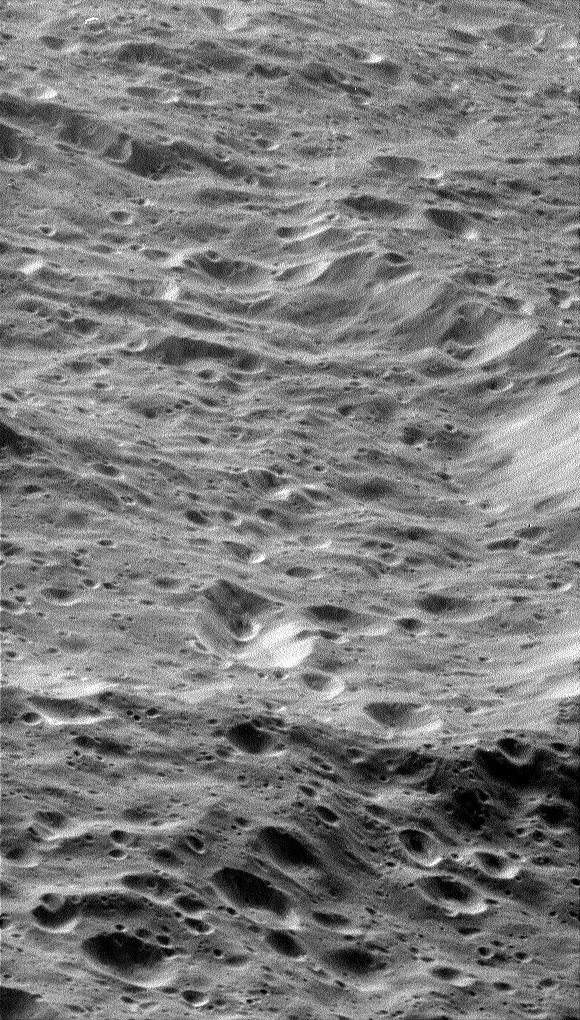 Close-up view of Rhea
