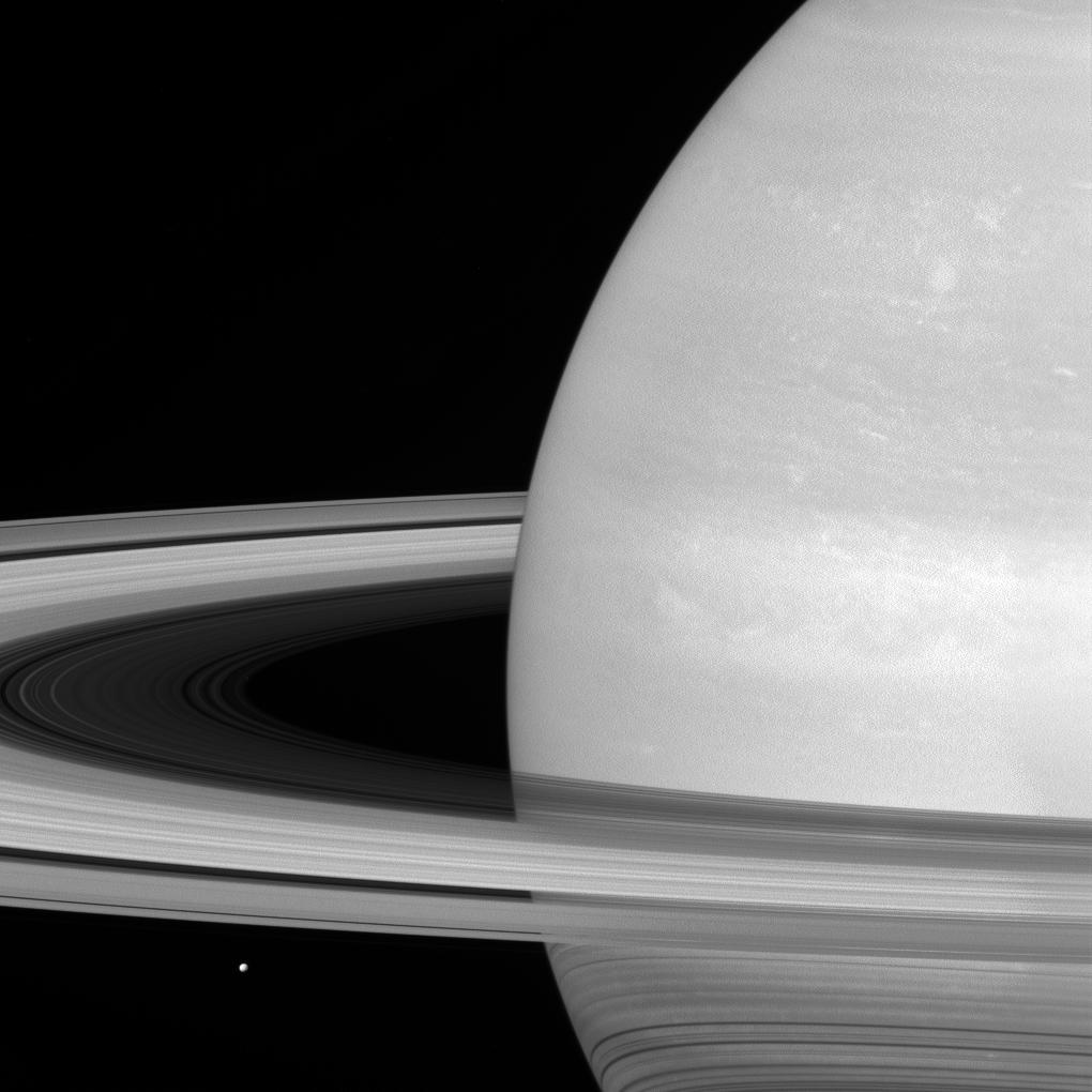 Saturn's icy moon Mimas is dwarfed by the planet's enormous rings.