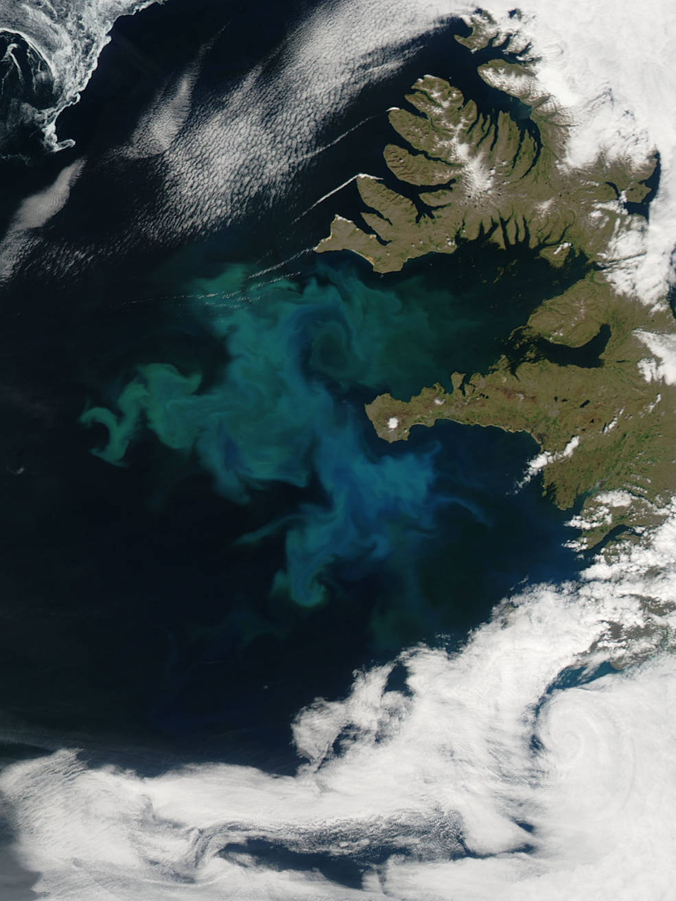 Satellite view of phytoplankton bloom