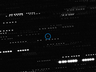 Telescope Image of 'Oumuamua